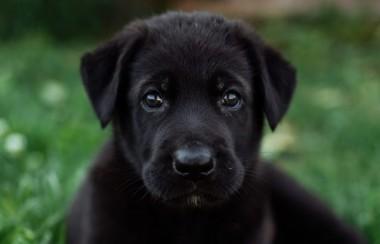 Đặc Điểm 1 Chú Chó Ta Khôn Ngoan?
