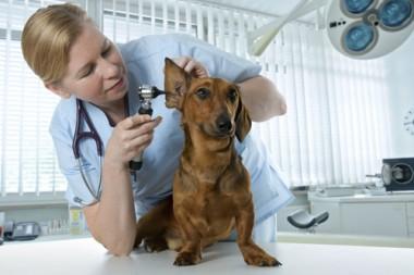 Bác sĩ thú y – Ngành học phát triển nhất trong tương lai