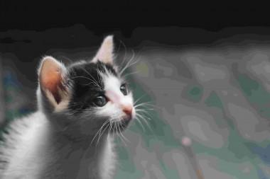 Cách Tự Chữa Bệnh Cúm Mèo Tại Nhà 5*