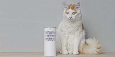 COVID là con dao hai lưỡi để phát triển mạnh doanh số bán hàng công nghệ cho thú cưng