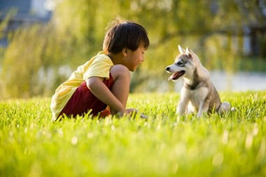 Những lợi ích bất ngờ của việc nuôi thú cưng trong nhà mà bạn nên biết