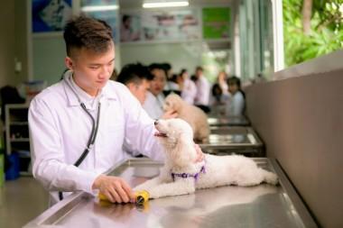 Hồ Sơ Đăng Ký Xét Tuyển Đại Học Thú Y Năm 2020