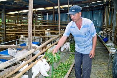 Thoát nghèo nhờ mô hình chăn nuôi dê nhốt chuồng