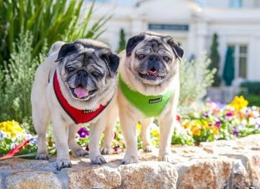 Chân dung những chú cún cưng thu hút hàng triệu lượt theo dõi trên MXH