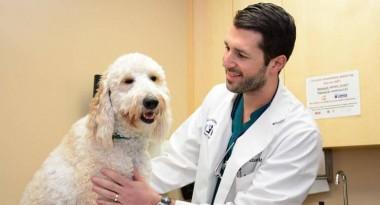 Học văn bằng 2 ngành bác sĩ thú y Hà Nội